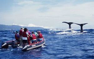 si whale watch